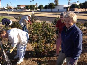 pruning-roses1-1