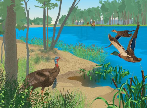 wildlife-scene